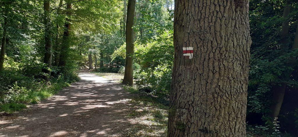 Balisage  GR dans la forêt
